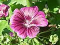 June 08 garden shots 011