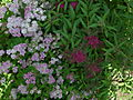 June 08 garden shots 005