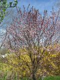Early garden Apr  7 2010 006