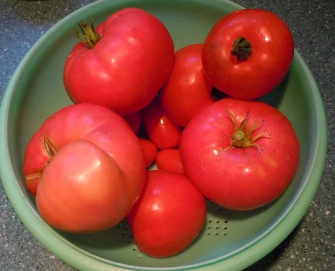August 28 harvest
