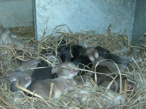 Color in the nestbox at 11 days old