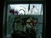 Indoor_plants_001