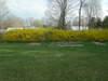 Yard_n_garden_008