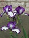 Yard_n_garden_019