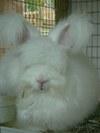 Bunnies_2007_001