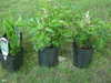 Yard_n_garden_030