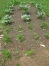 Yard_n_garden_034