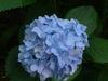 Yard_n_garden_048