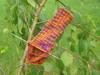 Knitting_028