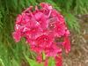 Yard_n_garden_053_2