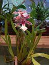 Orchids_002_2