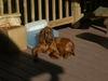 Keeva_sun_dog