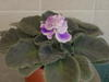 Blooming_nov07_005