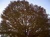 Trees_003