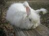 Bunny_run_002