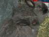 Bunny_run_005
