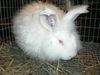 Bunny_run_008