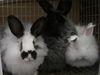 Bunny_run_012