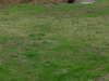 Lawn_002