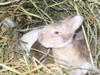 Baby_bunnies_2006_013