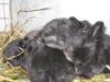 Baby_bunnies_2006_015