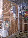 Birds_002
