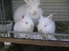 Bunnies_019_1