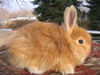 Bunnies_043_1