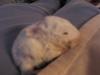 Bunnies_062