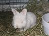 Bunnies_089
