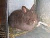 Bunnies_1105_009