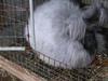 Bunnies_1105_013