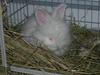 Bunnies_120