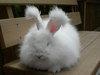 Bunnies_173_1