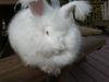 Bunnies_241