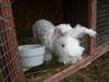 Bunny_shearing_004