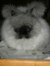 Bunny_shearing_013