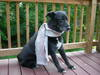 Dogs_024_1