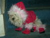 Dogs_036