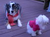 Dogs_056