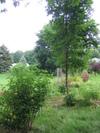 Garden_2006_001