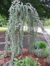 Garden_2006_010