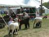Guilford_fair_2006_016