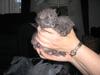 Kittens2_014