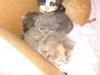 Kittens_004