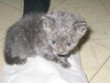 Kittens_and_bunnies_003