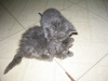 Kittens_and_bunnies_004