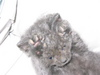 Kittens_and_bunnies_005
