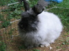 Kittens_and_bunnies_007