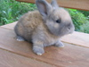 Kittens_and_bunnies_008